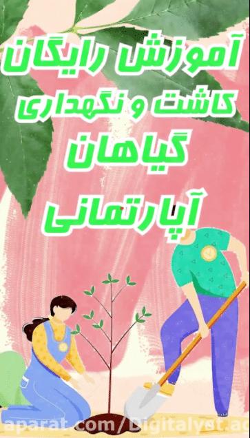 ساخت موشن گرافی شیراز